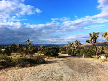 blackrock-campground-joshua-tree-national-park-7