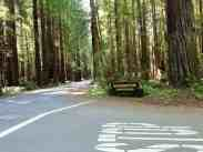 burlington-campground-humboldt-redwoods-state-park-01