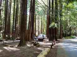 burlington-campground-humboldt-redwoods-state-park-09