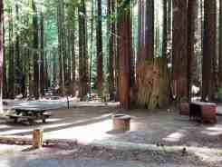 burlington-campground-humboldt-redwoods-state-park-10
