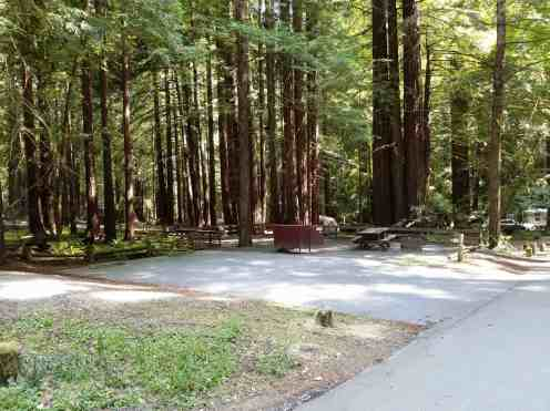 burlington-campground-humboldt-redwoods-state-park-12