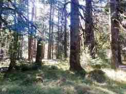 dosewallips-campground-olympic-national-park-05