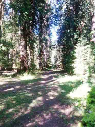 dosewallips-campground-olympic-national-park-10