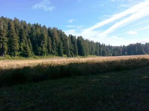 elk-prairie-campground-17