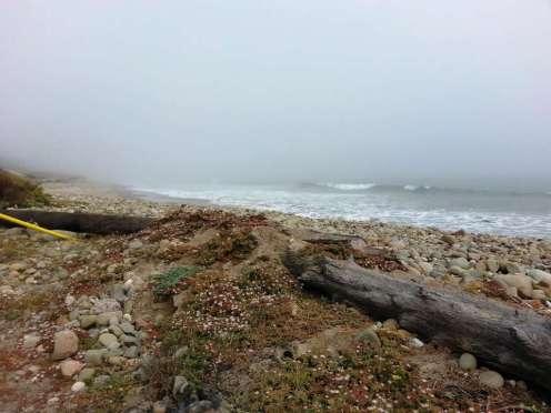 emma-wood-state-beach-campground-03