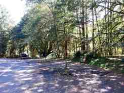 fairholme-campground-olympic-national-park-15