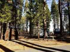 golden-pines (4)