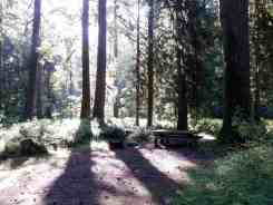 graves-creek-campground-olympic-national-park-17
