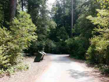 Jedediah Smith Campground Crescent City California Rv