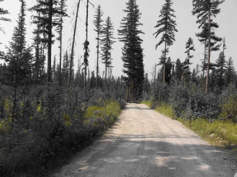 kintla-lake-campground-glacier-national-park-dirt-road