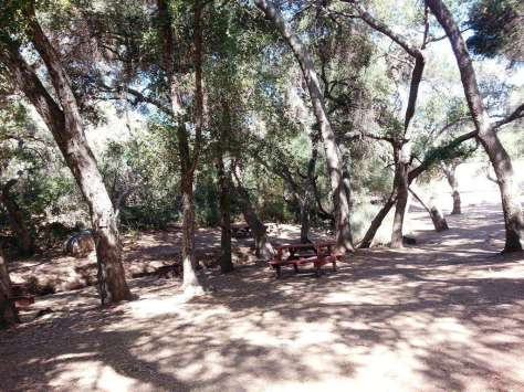 lilac-oaks-campground-california-14