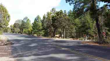 mather-campground-grand-canyon-0116