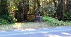 mill-creek-campground-redwoods-01