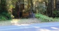 mill-creek-campground-redwoods-01
