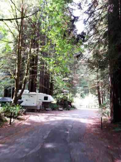 mill-creek-campground-redwoods-06