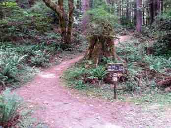 mill-creek-campground-redwoods-08