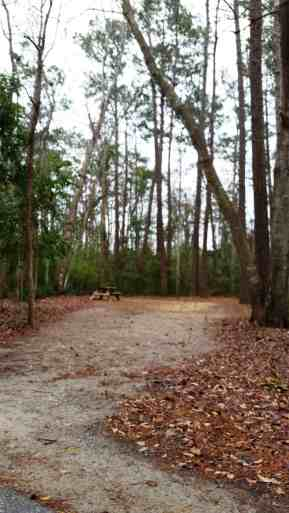 myrtle-beach-state-park-campground-myrtle-beach-sc-09