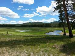norris-campground-yellowstone-national-park-praire