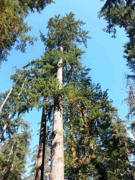 north-fork-campground-olympic-national-park-07