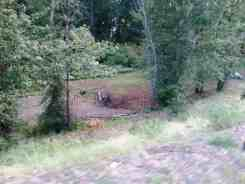pearrygin-lake-west-campground-wa-02