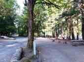 potlatch-state-park-campground-wa-2