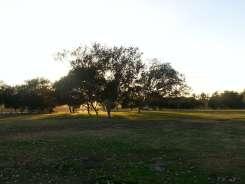 prado-regional-park-campground-03