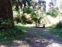 queets-campground-olympic-national-park-06