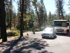 riverside-state-park-bowl-pitcher-campground-13