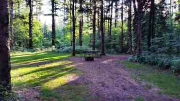 rocky-arbor-state-park-campground-wisconsin-dells-15