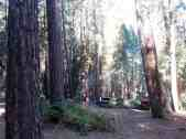sentinel-campground-sequoia-kings-canyon-national-park-02