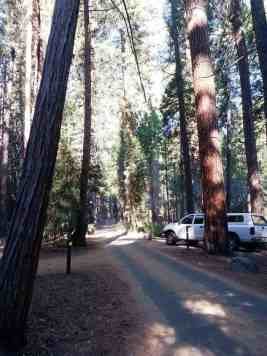 sentinel-campground-sequoia-kings-canyon-national-park-03