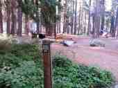 sentinel-campground-sequoia-kings-canyon-national-park-04