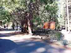 sentinel-campground-sequoia-kings-canyon-national-park-11