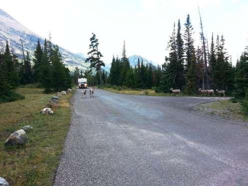 two-medicine-campground-glacier-national-park-11