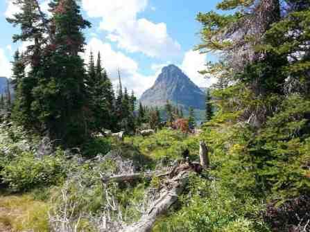 two-medicine-campground-glacier-national-park-33