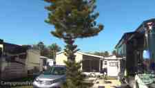 Big Tree Carefree RV Resort