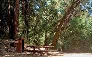 toyon-campground2