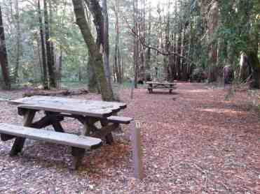 forest-nisene-marks-campground2