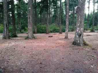 quilcene-community-campground-washington-2