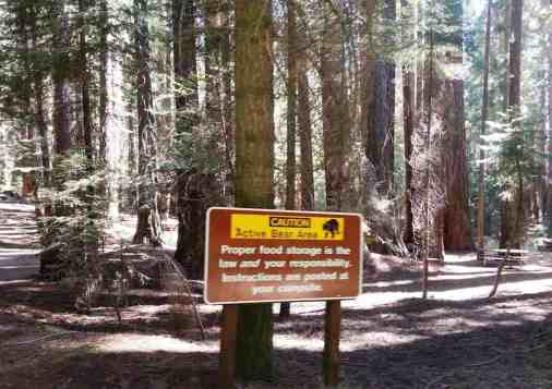 atwell-mill-campground-sequoia-national-park-03