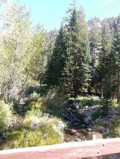 cold-springs-campground-sequoia-kings-canyon-national-park-04