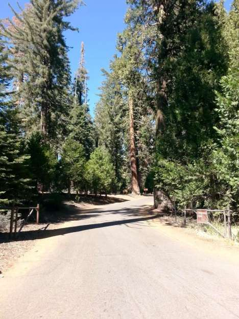 crystal-springs-campground-sequoia-kings-canyon-national-park-02