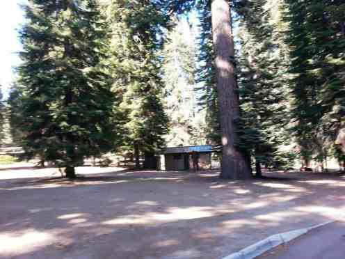 dorst-creek-campground-sequoia-kings-canyon-national-park-04