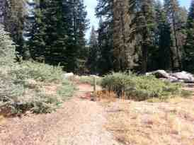 dorst-creek-campground-sequoia-kings-canyon-national-park-11