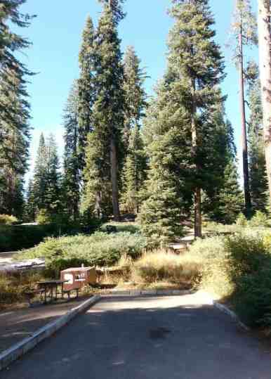 dorst-creek-campground-sequoia-kings-canyon-national-park-12