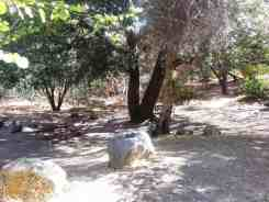south-fork-campground-seqouia-national-park-08