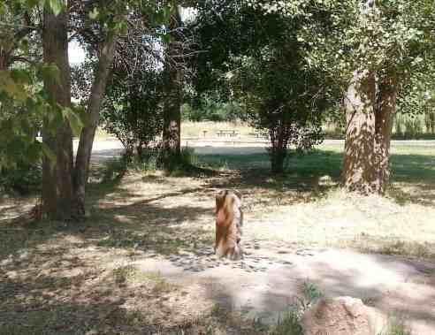 jefferson-hunt-campground-09