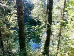 bear-creek-campground-port-angeles-wa-09