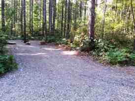 big-creek-campground-hoodsport-wa-06