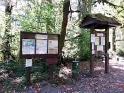 collins-campground-brinnon-wa-07